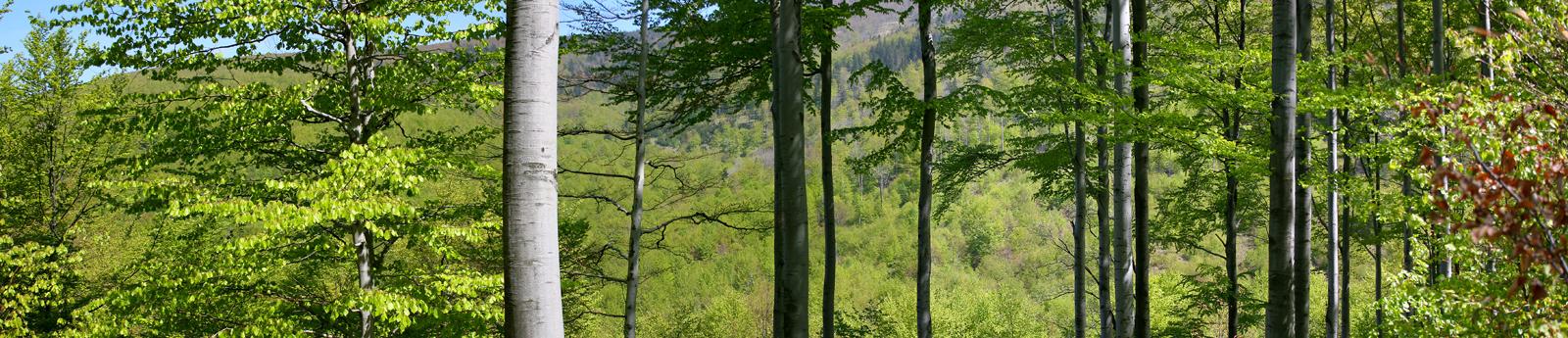 trees_panorama