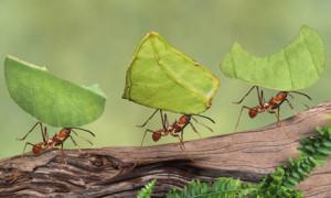 ants-3