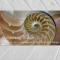Biomimicry Basics